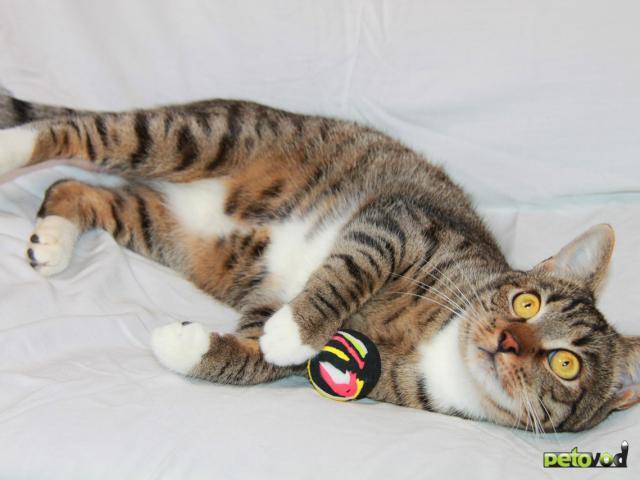 Отдам в дар: Кот Степан ищет свое кошачье счастье фото2