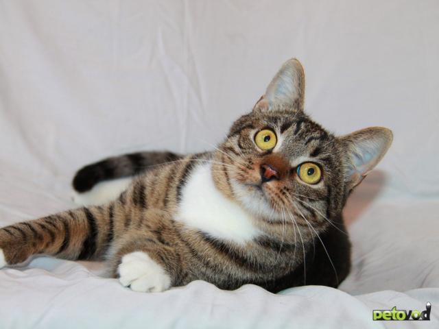 Отдам в дар: Кот Степан ищет свое кошачье счастье фото3