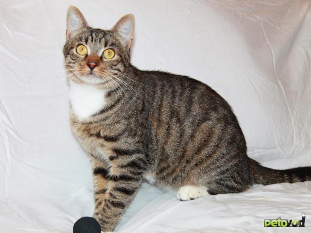Отдам в дар: Кот Степан ищет свое кошачье счастье фото4