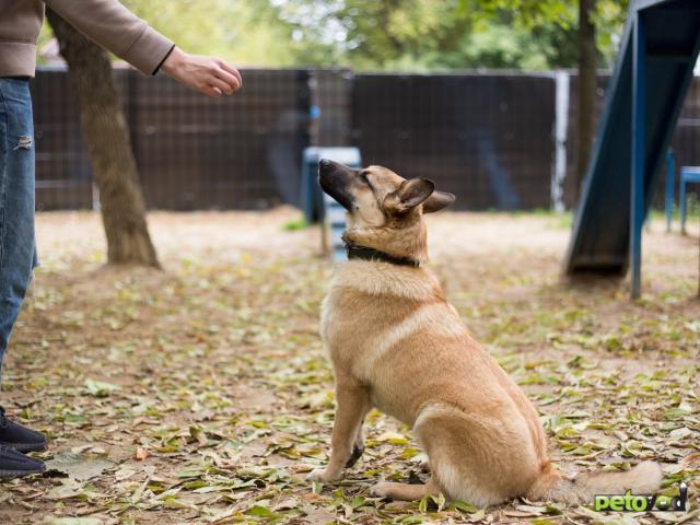 Отдам в дар: Собака Умка в добрые руки  фото2