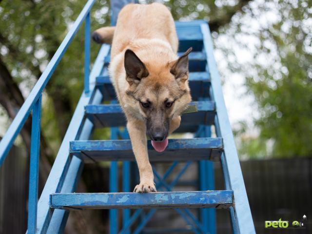 Отдам в дар: Собака Умка в добрые руки  фото3