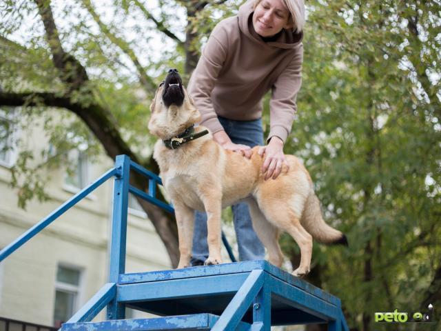 Отдам в дар: Собака Умка в добрые руки  фото4